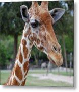Giraffe Youth Metal Print