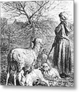 Girl Tending Sheep Metal Print