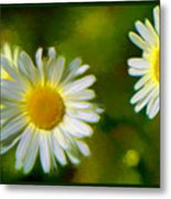 Give Me Daisy In Color Metal Print
