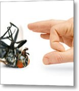 Give Pests The Flick Metal Print