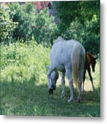 Giverny Mare And Foal Landscape Metal Print