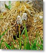 Glacial Wildflowers Metal Print
