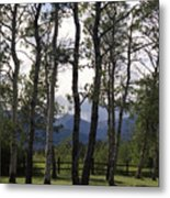 Glacier National Park Green Trees Mountains Metal Print