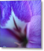 Gladiola Close-up Metal Print by Kathy Yates