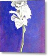 Gladiolus 1 Metal Print
