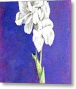 Gladiolus 2 Metal Print