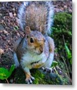 Glasgow Squirrel Metal Print