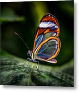 Glasswing Butterfly Iridescence  Metal Print