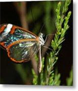 Glasswinged Butterfly Metal Print