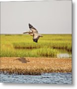Gliding Over A Shell Island Metal Print