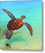 Gliding Through The Sea Metal Print