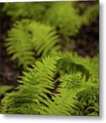 Glimmering Ferns Metal Print