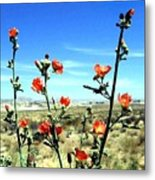 Globe Mallows Metal Print