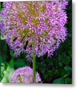 Globe Thistle Flowers Metal Print