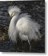 Glorious Egret Metal Print