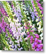 Glorious Foxgloves Metal Print