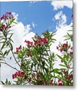 Glorious Fragrant Oleanders Reaching For The Sky Metal Print
