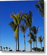 Glorious Palms Metal Print