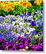Glorious Pansies Metal Print