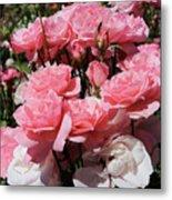 Glorious Pink Roses Metal Print