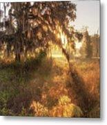 Glorious Sunrise At The Oak Tree Metal Print