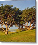 Glory In The Morning Txb Metal Print