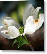Glory Of Spring Metal Print