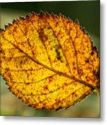 Glowing Fall Leaf Metal Print