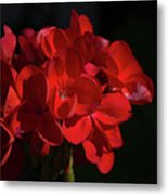 Glowing Flower In The Dark Metal Print