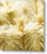 Glowing In Sunlight Golden Plants Metal Print