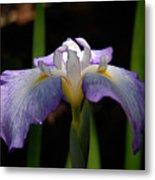 Glowing Iris Metal Print