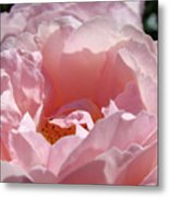 Glowing Pink Rose Flower Giclee Prints Baslee Troutman Metal Print