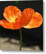 Glowing Poppy Metal Print
