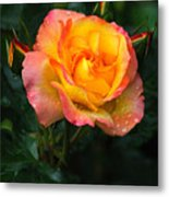 Glowing Rose Metal Print