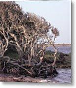 Gnarled Oak Trees Metal Print