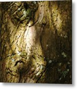 Gnarly BC Tree Metal Print