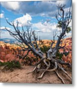 Gnarly - Bryce Canyon Metal Print