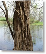 Gnarly Tree 3 Metal Print