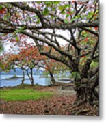 Gnarly Trees Of South Hilo Bay - Hawaii Metal Print