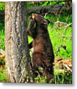 Go Climb A Tree Metal Print