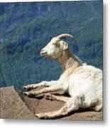 Goat Enjoy The Sun Metal Print