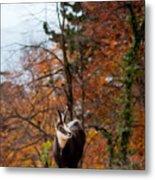 Goat In The Austrian Alps Metal Print