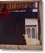 Goat In Window Metal Print