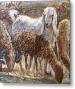 Goat With Sheep Metal Print