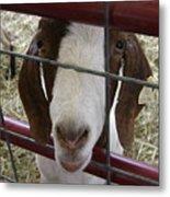 Goat2 Metal Print