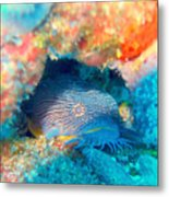 Goatfish Metal Print