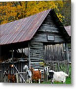 Goats At Rose Briar Farm Metal Print