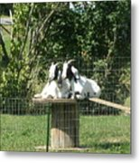 Goats Dreaming Of Trouble Metal Print