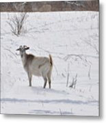 Goats In Snow Metal Print