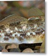 Goby Fish Metal Print